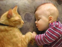 Sweet toddler sleeping alongside kitten