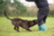 Dog-Versus-Security-System-Dog-Biting-Ma