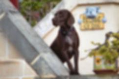 Dog-Versus-Security-System-jpg.jpg