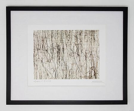 Sunlit Reeds 17x21