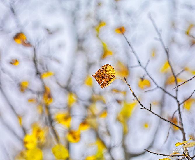Leaf Alone