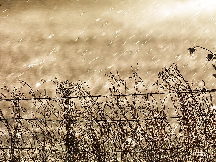 Idaho Rain