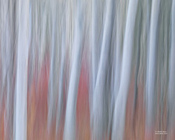 Tree Dreams