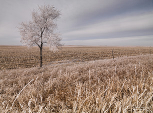 North Dakota Autumn