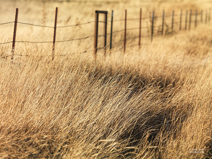 Desolate Fence