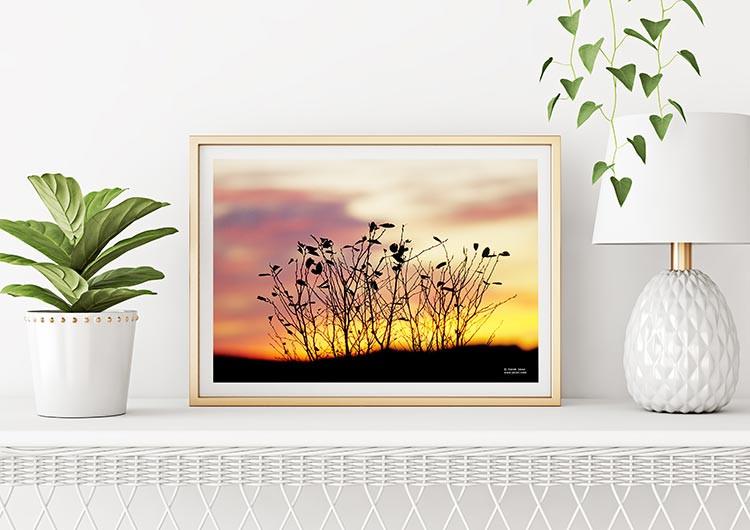 sunset_leaves_by_derek_jecxz_inuse_1.jpg