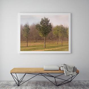 army_of_trees_by_derek_jecxz_inuse_1.jpg