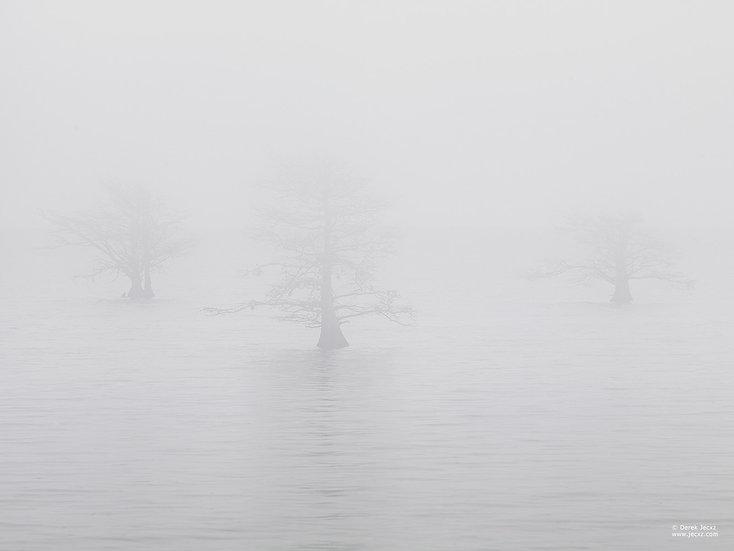 Three Quiet Trees