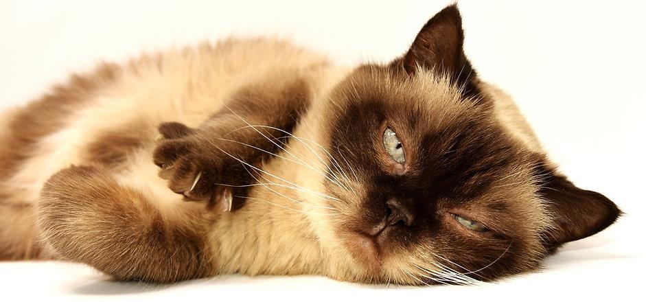 cat-3113513_1920.jpg