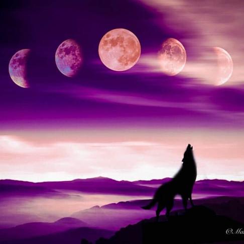 🌚 Cycle de Lune : Lundi 20 Juillet au Mardi 18 Août 🌝