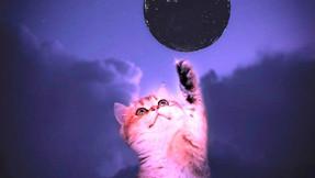 Nouvelle Lune 06 Octobre 2021 🌚