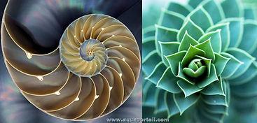 biomimetisme.jpg
