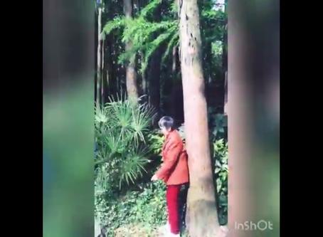 Qi gong des arbres