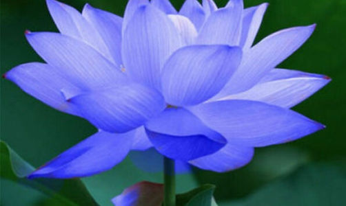 blue-lotus-feng-shui-package_edited.jpg