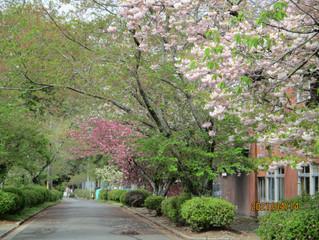 新緑の参道