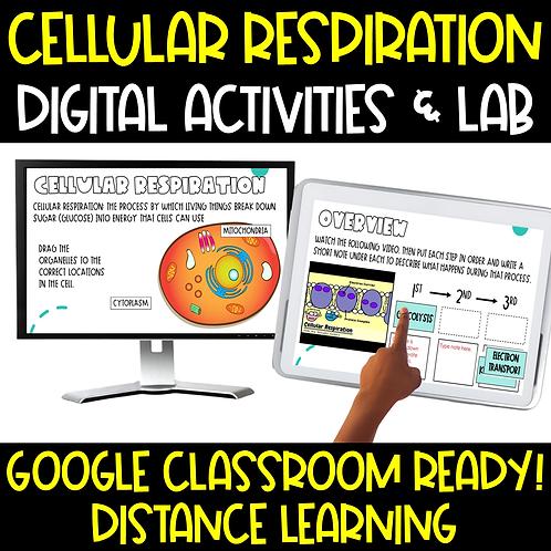 Cellular Respiration Interactive Google Slides
