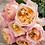 Английская срезочная роза Эдит (Edith) Остина