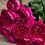 Роза Дарси (Darcey) английская Дэвида Остина, малиновая пионовидная