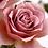 роза кафе латте