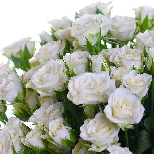 Роза белая кустовая спрей Сноуфлейк Snowflake Ледреборг