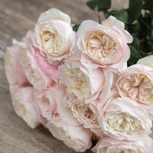 Английская розовая роза Роза Keira Кейра Rosesmol