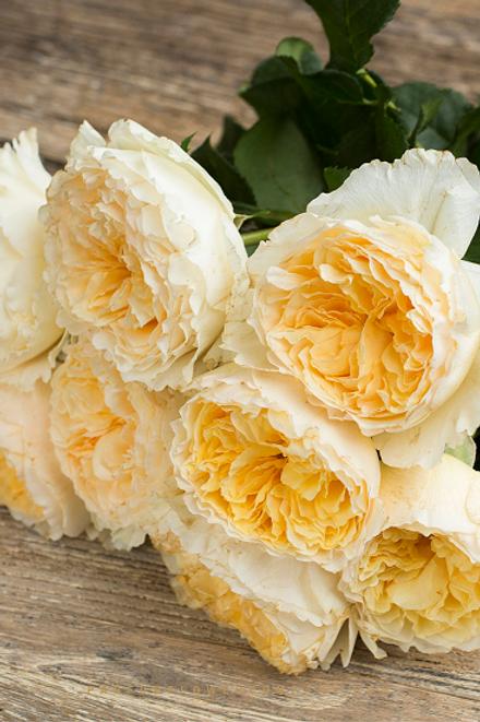 желтая срезочная английская роза Беатрис (Beatrice) купить саженцы интернет-магазин питомник ROSESMOL