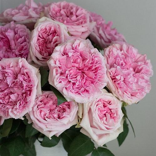 Миранда (Miranda) Английская роза