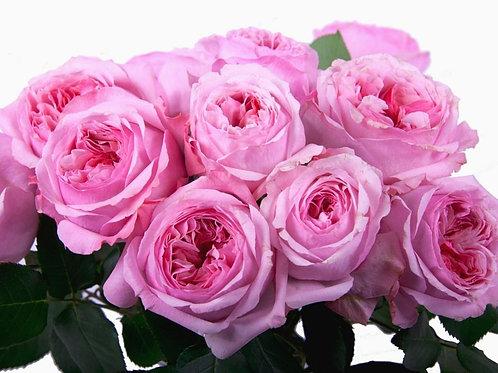 Кэри (Carey) Английская роза