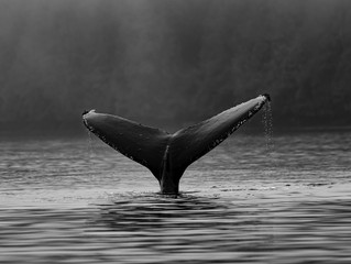 Swallowed by a whale? You just might have a bestseller