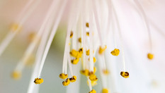 Hay fever season is on its way - are you ready?