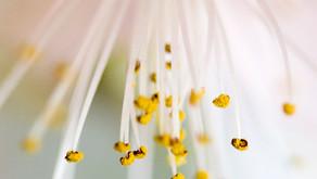 Quels compléments naturels contre les allergies ?