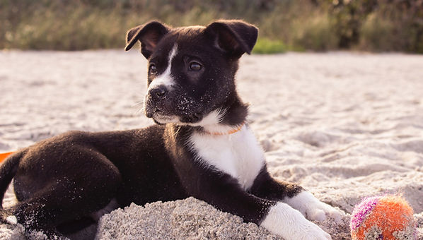 Beach-Safety-Tips-for-Dogs-Puppy-playing