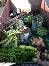 Harvest Photo.jpeg.opt173x230o0,0s173x23