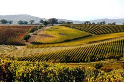 Toscana (9).jpg