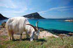 Sardegna (13).jpg