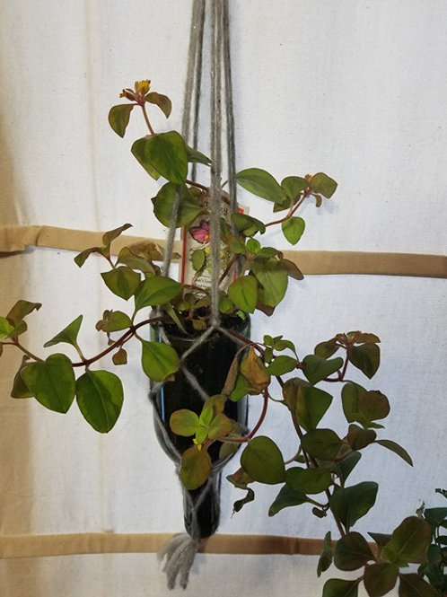 Vertical Hanging Wine Bottle Planter