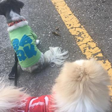 rho dogs.jpg