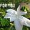 Thumbnail: For You Eau de Parfum 50ml (Chance by Chanel)
