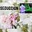 Thumbnail: Seduccion Eau De Parfum 50ml (Chloe by Chloe)