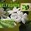 Thumbnail: Velfashion Eau De Parfum 50ml (Allure by Chanel)