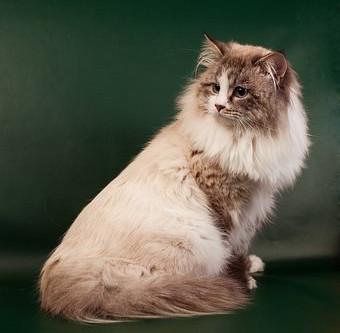 A Cat Groomer's Dilemma