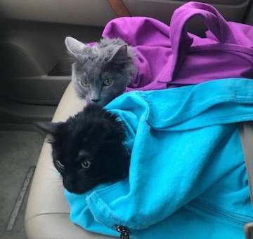 Cat-in-the-bag promotes stress-free travels