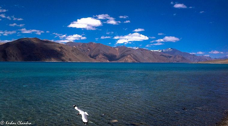 Lake of Pangong, Ladakh, India