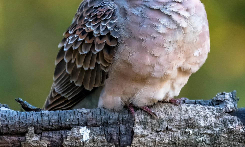 kc_birds_45