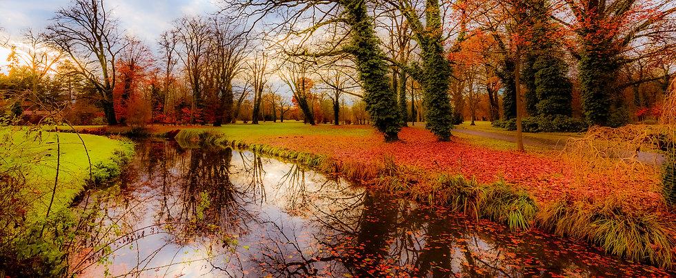 Autumn flowers, Potsdam, Germany