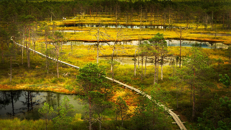 Nature's Variatians, Estonia