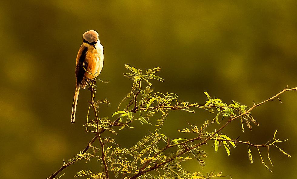 kc_birds_44