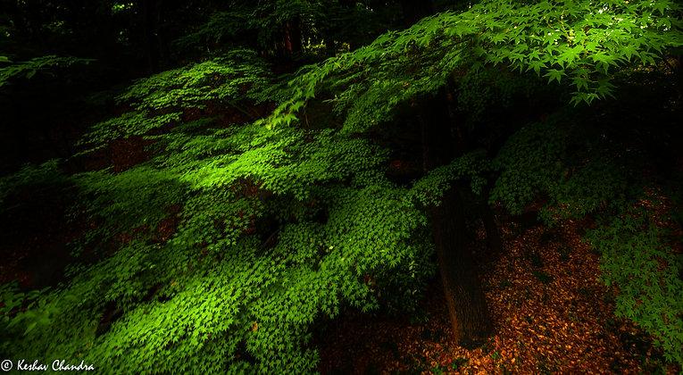 Forest, Tokyo, Japan