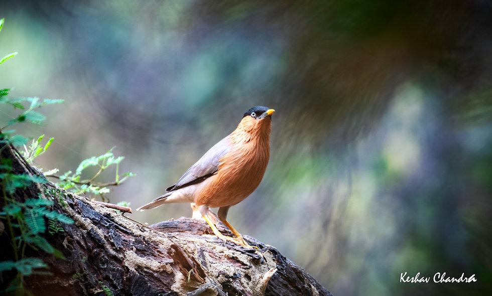 kc_birds_06