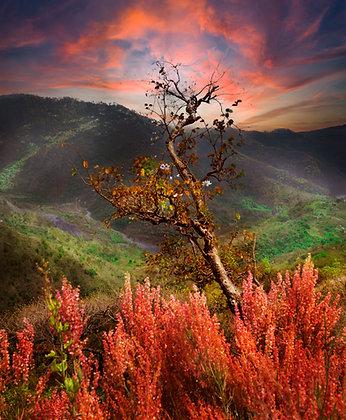 Nature's Fiery, Binsar, India